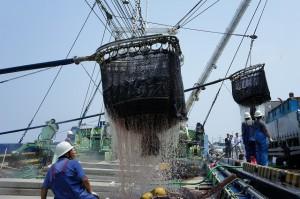 03買付けた原料を船から移動(銚子水揚げ鰯)